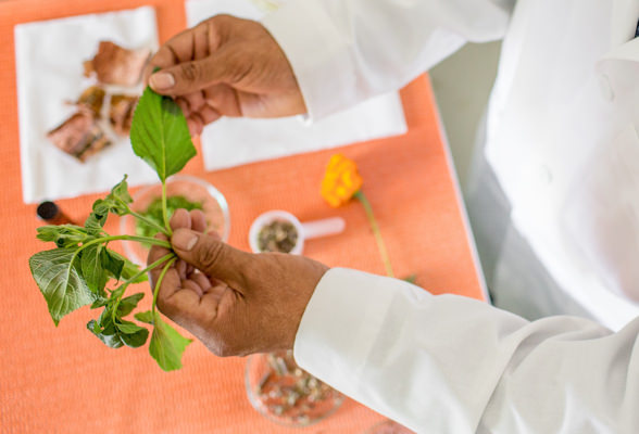 Amway research and development, scientist examining natural plants as ingredients.