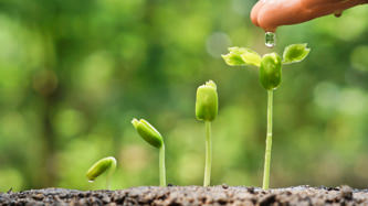 Water & Wellness: Water is essential to life. Background image shows a hand dripping a water droplet onto a green seedling.
